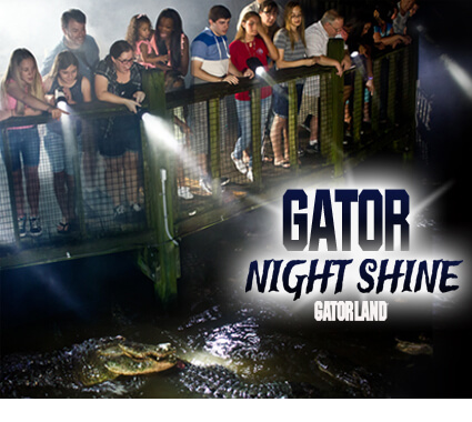 Gator Night Shine