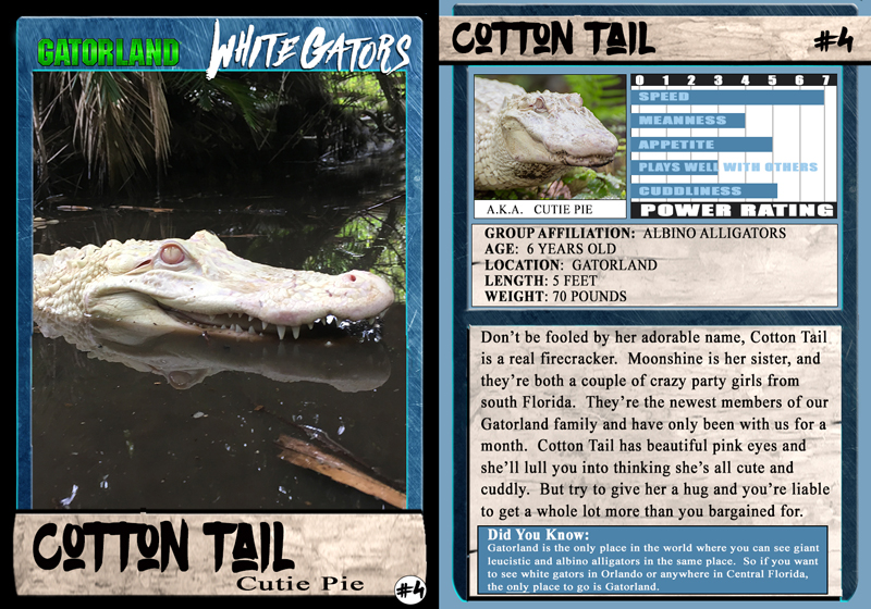Cottontail | White Gator Trading Cards | Gatorland | Orlando Florida Family Adventure Theme Park