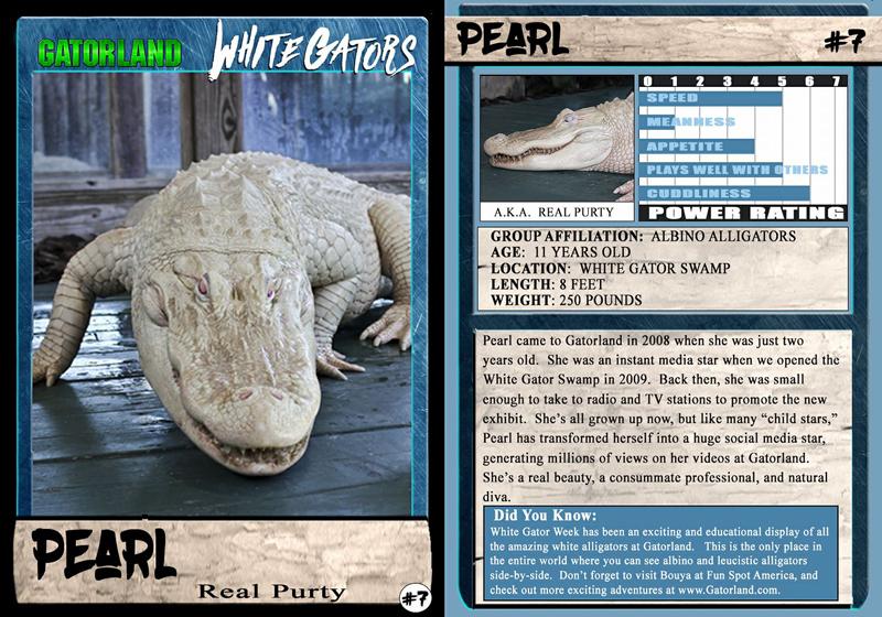 Pearl | White Gator Trading Cards | Gatorland | Orlando Florida Family Adventure Theme Park
