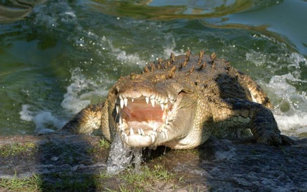 Crocodiles | Gatorland | Orlando Florida Family Adventure Theme Park