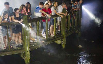 Gator Night Shine | Gatorland | Orlando Florida Family Adventure Theme Park