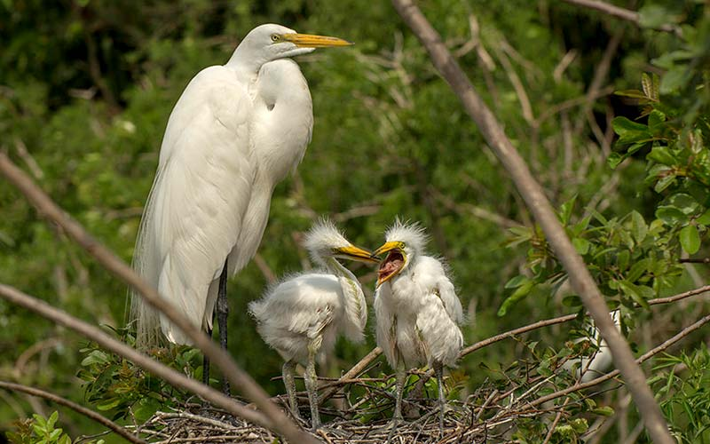 Egret Family | Gatorland | Orlando Florida Family Adventure Theme Park