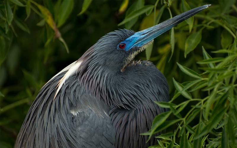 Heron | Gatorland | Orlando Florida Family Adventure Theme Park