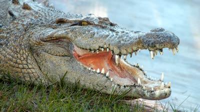 Crocodiles | Gatorland | Orlando Florida Family Adventure Theme Park