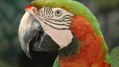Parrots | Gatorland | Orlando Florida Family Adventure Theme Park