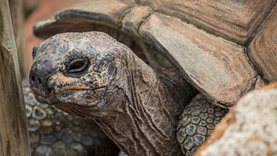 Tortoises | Gatorland | Orlando Florida Family Adventure Theme Park