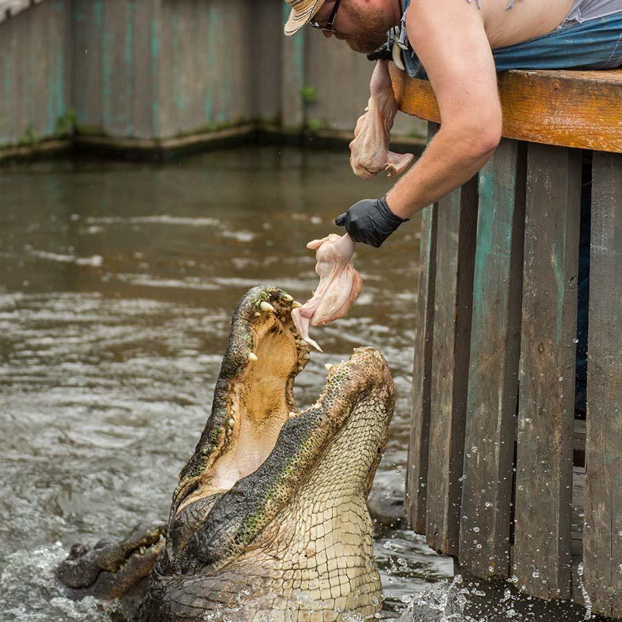 Gator Jumparoo Show | Gatorland | Orlando Florida Family Adventure Theme Park