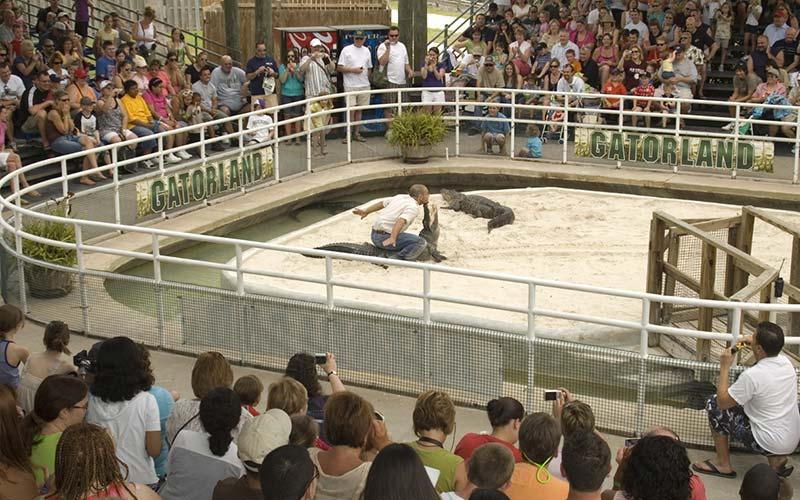 Gator Wrestling | Gatorland | Orlando Florida Family Adventure Theme Park