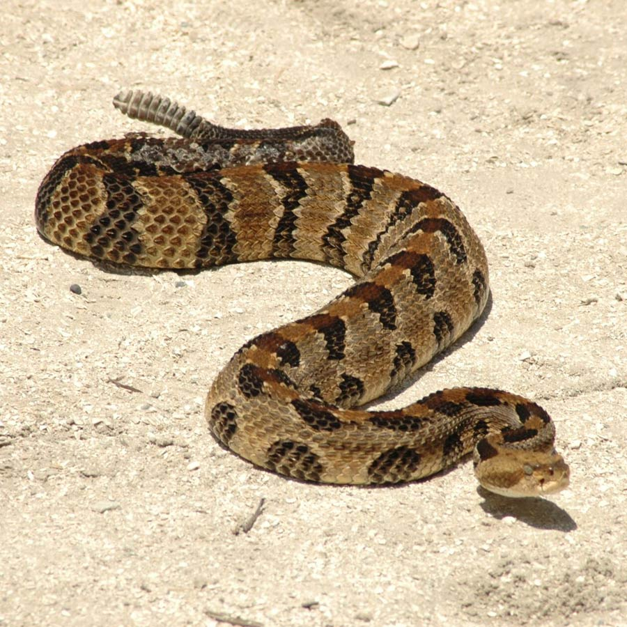Snakes | Gatorland | Orlando Florida Family Adventure Theme Park
