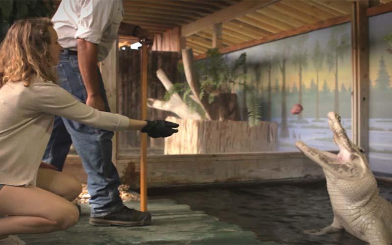 Trainer for A Day   Gatorland   Orlando Florida Family Adventure Theme Park
